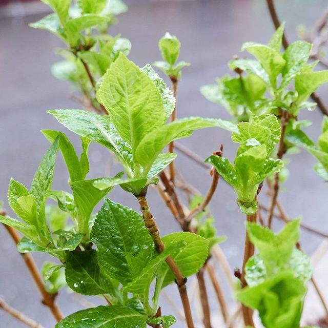 雨で嬉しそう#蔵前#こめて#花屋#カチクラ#花のある暮らし#植物と暮らす